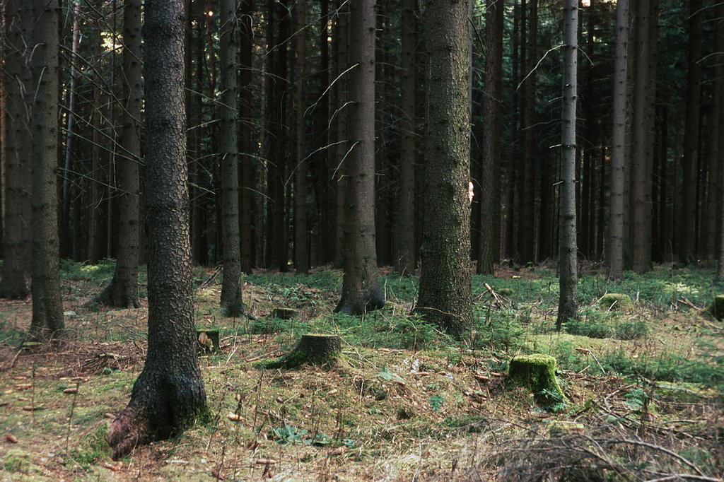 HeimatRuhe | WaldGewesen